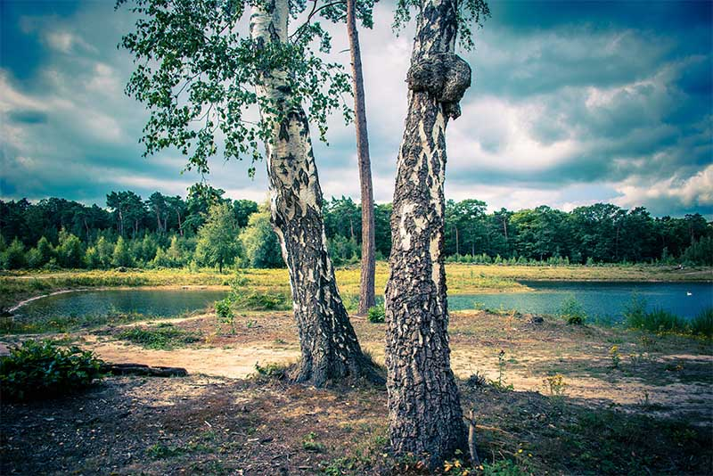Drie bomen-Foto Jille Zuidema