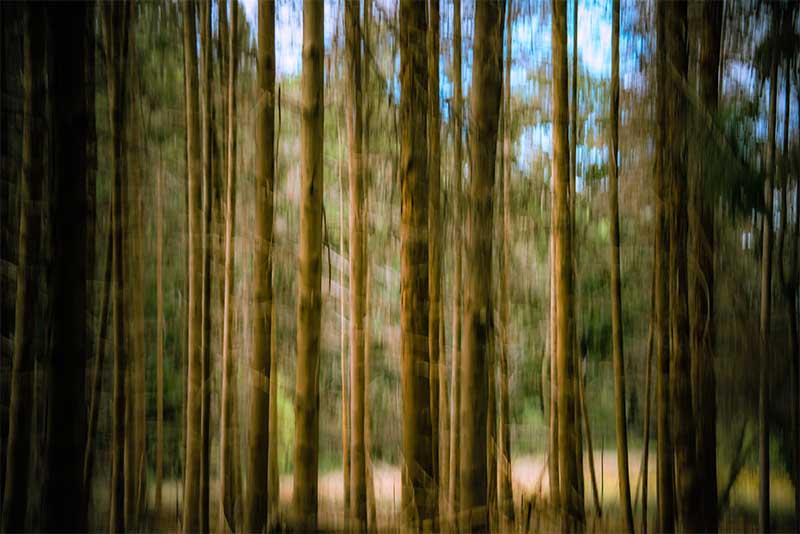 Lange bomen-Foto Jille Zuidema