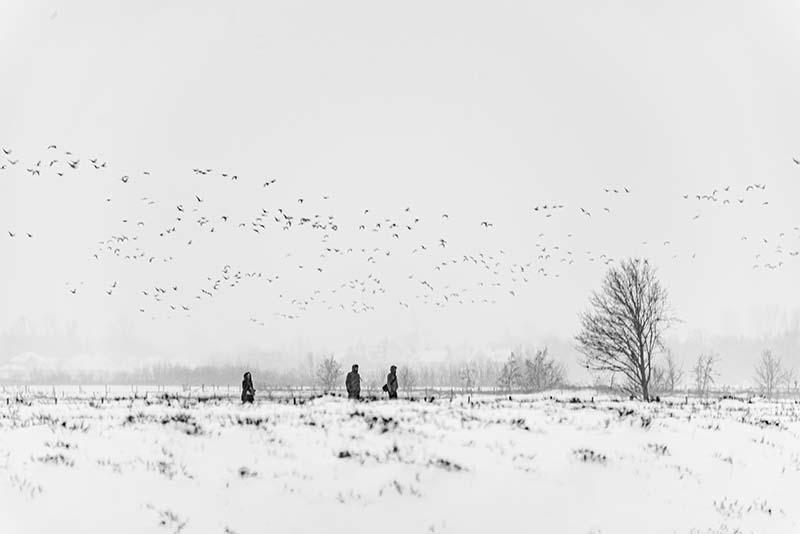 Besneeuwd weiland met zwerm vogels